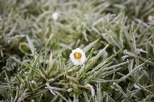 frost-1149002_640