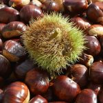 chestnuts-2804023_640