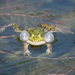frog-3394580_640