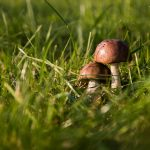 mushrooms-454172_640