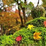 autumnal-leaves-2778843_640