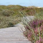 boardwalk-537113_640
