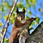 squirrel-4144258_640