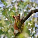 squirrel-4318302_640