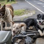 dogs-4477058_640
