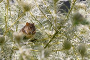 mouse-4691724_640