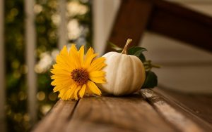 thanksgiving-3811492_640