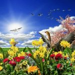 spring-meadow-1274897_640
